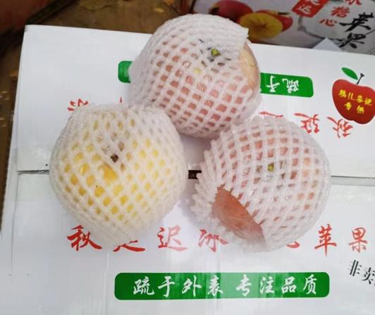 宁津苹果种植